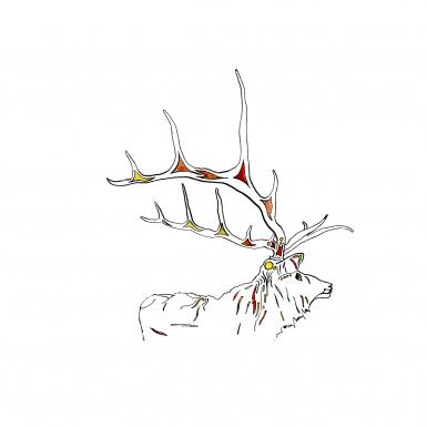 elk-by-ned-tobin